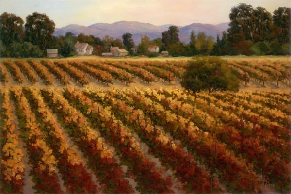 Evening Vineyard In November